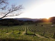 долина захода солнца napa Стоковые Фото
