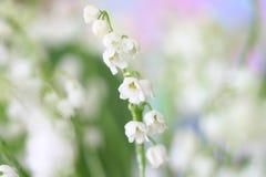 долина лилии стоковые фотографии rf