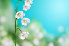 долина лилии Стоковые Фото