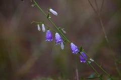 долина лилий Стоковые Фото
