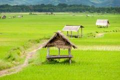 долина неочищенных рисов namtha luang Лаоса стоковые изображения rf