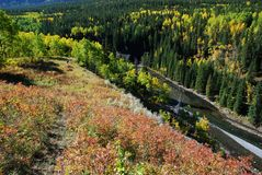 долина овец реки осени стоковое изображение rf