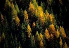 долина падения ayas Стоковое Фото