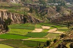 долина Перу colca Стоковое Изображение