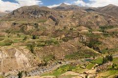 долина Перу colca Стоковые Изображения