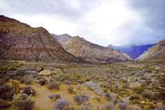 долина пустыни Стоковое Фото