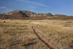 долина тропки горы colorado скотин Стоковая Фотография
