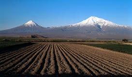 долина ararat Стоковые Изображения