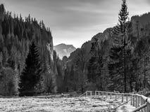 Долина Chocholowska Стоковые Фото