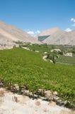долина elqui Чили Стоковые Изображения