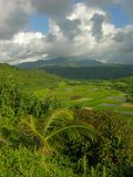 долина kauai hanalei Стоковые Изображения
