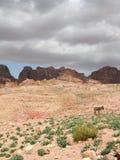 долина petra Стоковые Фотографии RF