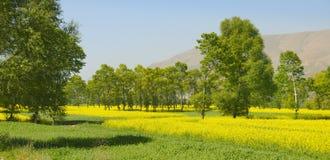 долина rapeseed поля высокая стоковая фотография rf