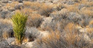 долина sagebrush смерти california кактуса стоковые изображения