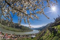 Долина Wachau во время времени весны с деревней шпица в Австрии Стоковое Изображение