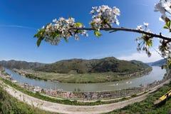 Долина Wachau во время времени весны с деревней шпица в Австрии Стоковые Изображения RF