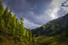 долины пущ Стоковая Фотография