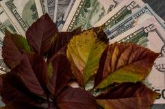 100 долларовых банкнот под естественными красными листьями осени Стоковая Фотография