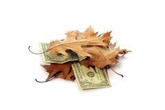 доллары листьев стоковые изображения rf