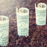 Доллары растя из земли Концепция выгоды, роста, дохода, прибыльного инвестирования Стоковое Изображение RF