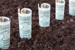 Доллары растя из земли Концепция выгоды, роста, дохода, прибыльного инвестирования Стоковая Фотография