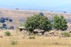 Дольмен - каменное захоронение бронзового века в зоне Голанских высот, Израиле Gamla стоковое изображение rf