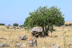 Дольмен - каменное захоронение бронзового века в зоне Голанских высот, Израиле Gamla стоковое фото rf