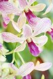 Домашнее украшение с букетом фонариков и цветков свечи Стоковое фото RF