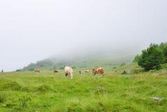 Домашние животные на зеленом поле горы Стоковое Изображение