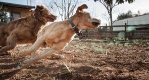 домашние животные, собаки Стоковые Фотографии RF