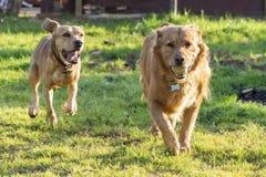 домашние животные, собаки стоковое изображение