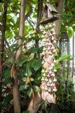 Домашние шторки сада сделанные раковиной Стоковые Изображения RF