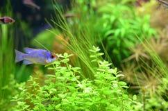 Домашний аквариум Стоковая Фотография