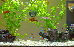 Домашний аквариум Стоковое Фото