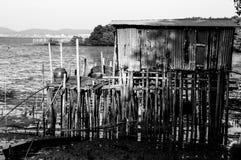 Домашний лес мангровы Стоковая Фотография