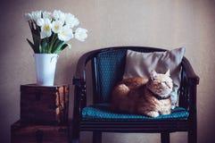Домашний интерьер, кот Стоковое Изображение RF