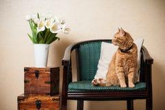 Домашний интерьер, кот Стоковое фото RF