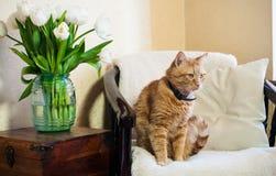 Домашний интерьер, кот Стоковая Фотография