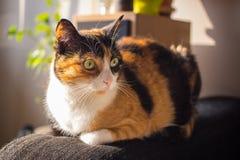 Домашний кот в солнце Стоковые Фотографии RF
