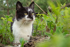 Домашний кот Стоковое Фото