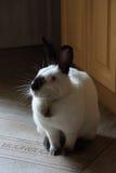 Домашний кролик стоковое фото rf