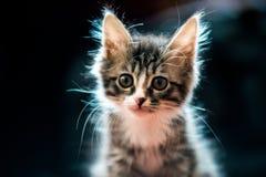 домашний меховой кот смотря где-то в расстоянии стоковые изображения