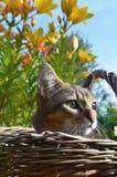 Домашний милый кот Стоковые Изображения
