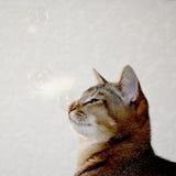 Домашний милый кот Стоковая Фотография
