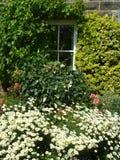 Домашний сад Стоковое Изображение RF