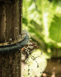Домашний сад Стоковые Фото