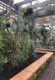 Домашний сад Стоковые Изображения