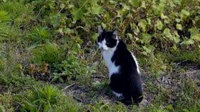 Домашняя кошка в диком акции видеоматериалы
