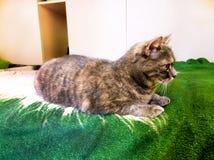 Домашняя кошка в момент охотиться Стоковые Фото