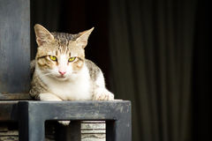 Домашняя кошка лежа вниз Стоковое фото RF